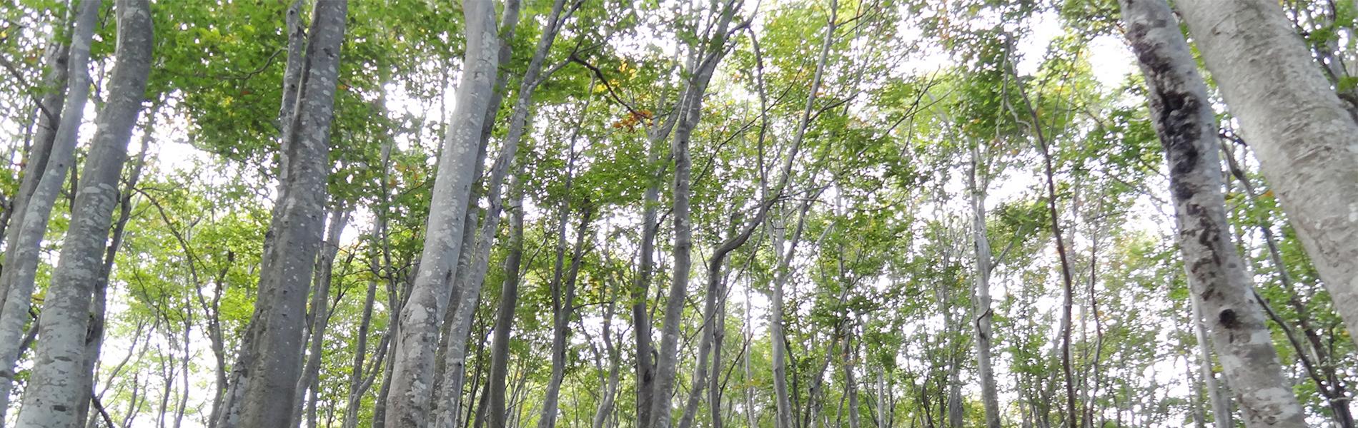猿倉緑の森の会